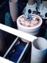 Toilet09_1